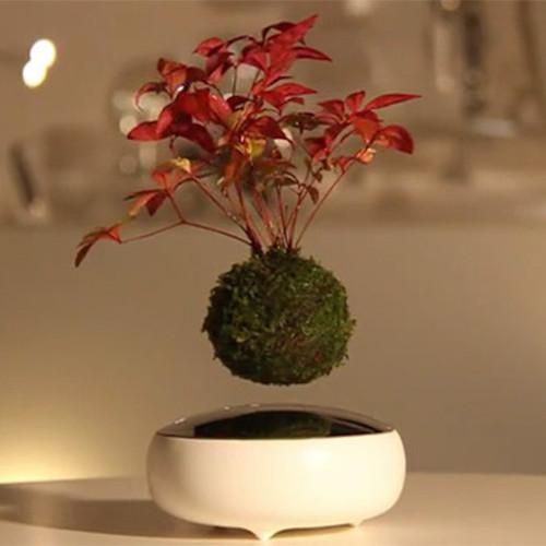 Bonsai en levitación
